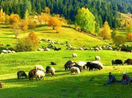 Türkiye'deki cittaslow şehirler – Türkiye'nin sakin şehirleri